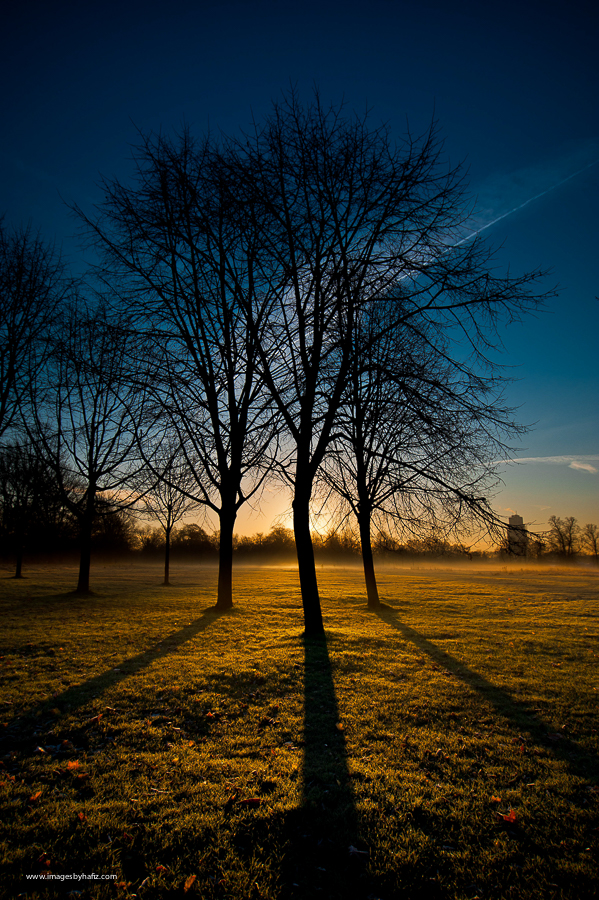 Silhouette of 3 big trees at sunrise