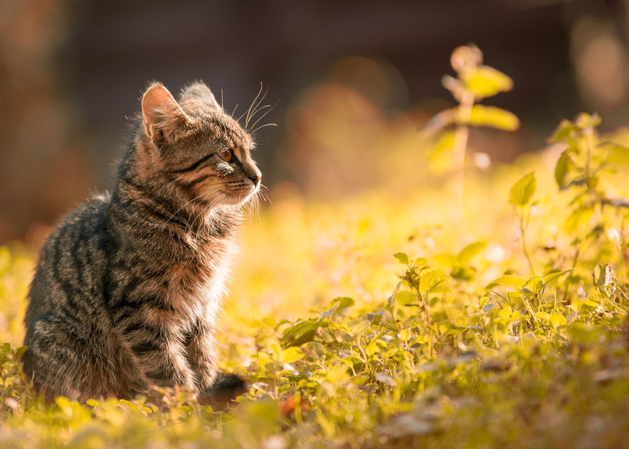 Pet photography cat in the wild