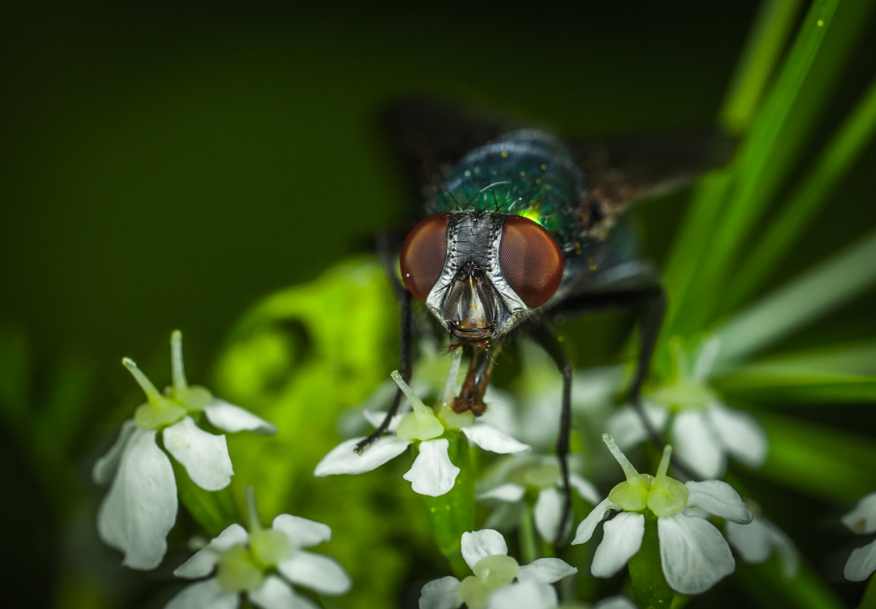 Macro photo of fly and flowers